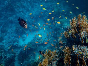 【福岡の映像制作向けロケ地】マリンワールド海の中道 – 水族館の撮影