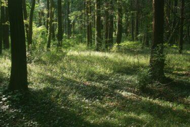 【福岡の映像制作向けロケ地】四王寺県民の森 – 自然やデイキャンプの撮影